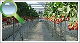 ベンチ栽培の紹介