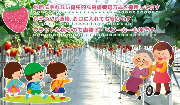 埼玉県でいちご狩りハウスの紹介